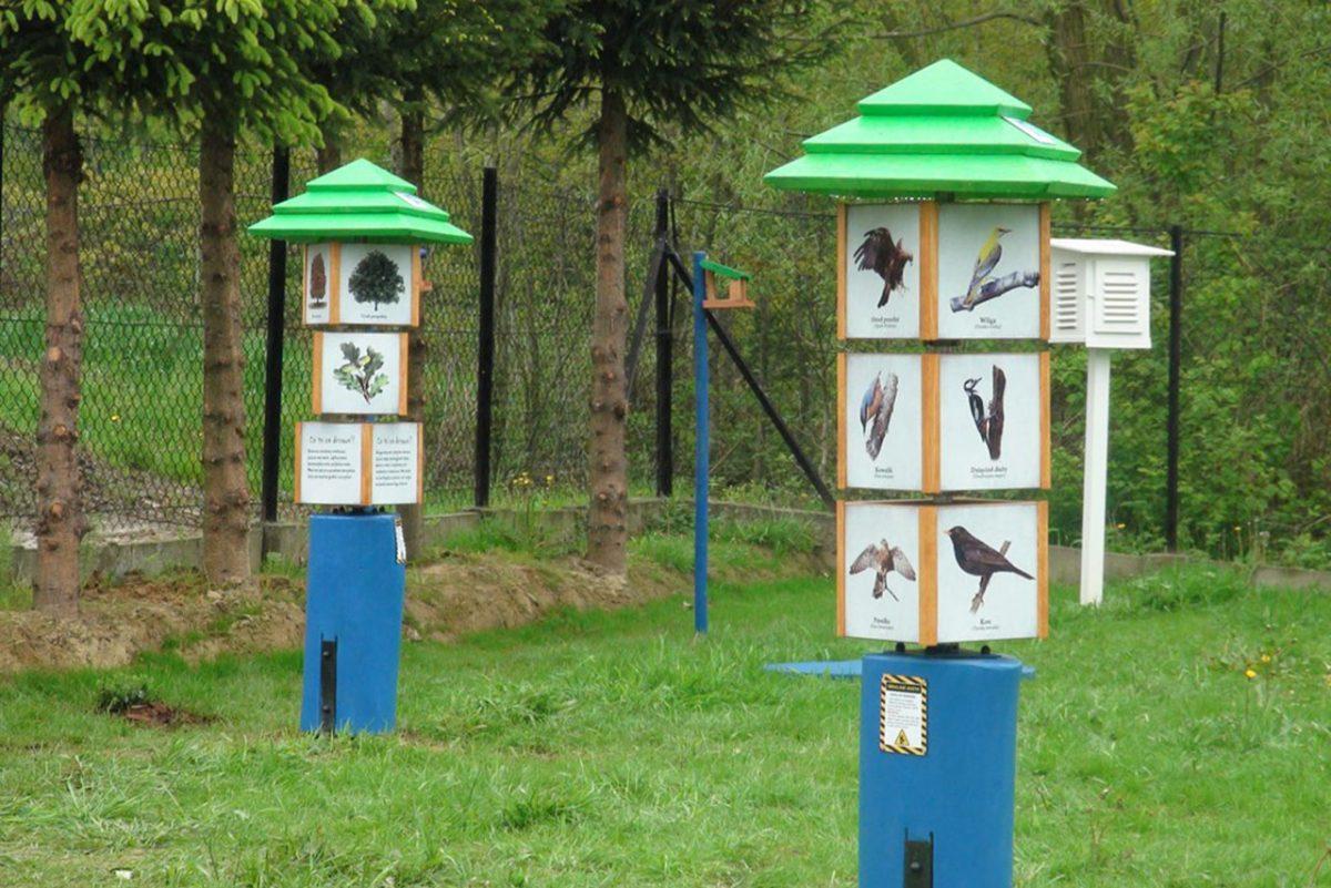60 rzadkich gatunków ptaków w Polsce – jak długo?